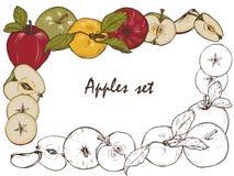 Μήλα, καρυκεύματα και σύνολο μούρων Στοκ φωτογραφία με δικαίωμα ελεύθερης χρήσης