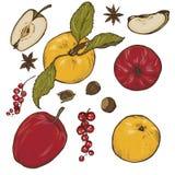 Μήλα, καρυκεύματα και σύνολο μούρων Στοκ Φωτογραφία