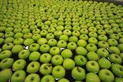 Μήλα πλύσης Στοκ φωτογραφία με δικαίωμα ελεύθερης χρήσης