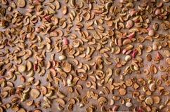 Μήλα που παίρνουν ξηρά στοκ εικόνα με δικαίωμα ελεύθερης χρήσης