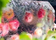Μήλα που παγώνουν σε έναν φραγμό του πάγου στοκ εικόνα