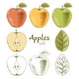 μήλα που τίθενται Στοκ Εικόνες