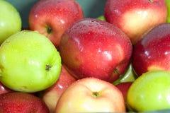 μήλα που χρωματίζονται Στοκ Φωτογραφία