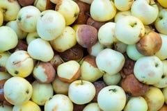 μήλα σάπια Στοκ εικόνα με δικαίωμα ελεύθερης χρήσης