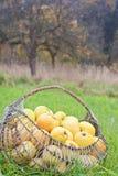 Μήλα σε ένα καλάθι Στοκ Εικόνες