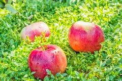 Μήλα στην πράσινη χλόη, κινηματογράφηση σε πρώτο πλάνο Στοκ φωτογραφία με δικαίωμα ελεύθερης χρήσης