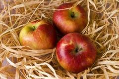 μήλα τρία Στοκ Εικόνες