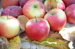 Μήλα φθινοπώρου, φύλλα φθινοπώρου, οργανικά φρέσκα όμορφα κόκκινα μήλα σε ένα χωριό σε έναν κήπο σε μια ξύλινη επιφάνεια Στο α Στοκ εικόνες με δικαίωμα ελεύθερης χρήσης