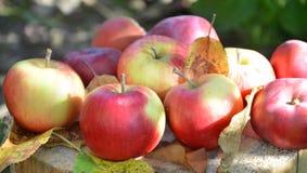 Μήλα φθινοπώρου, φύλλα φθινοπώρου, οργανικά φρέσκα όμορφα κόκκινα μήλα σε ένα χωριό σε έναν κήπο σε μια ξύλινη επιφάνεια Στο α Στοκ φωτογραφία με δικαίωμα ελεύθερης χρήσης