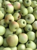 Μήλα φθινοπώρου στοκ εικόνες