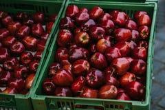 μήλα φρέσκα Φυσικά τοπικά προϊόντα στην αγροτική αγορά συγκομιδή Εποχιακά προϊόντα Τρόφιμα Στοκ Εικόνα