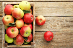 μήλα ώριμα Στοκ φωτογραφίες με δικαίωμα ελεύθερης χρήσης