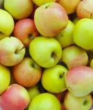 μήλα Στοκ εικόνα με δικαίωμα ελεύθερης χρήσης