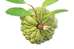 Μήλο ζάχαρης ή squamosa Annona που απομονώνεται στο άσπρο υπόβαθρο στοκ φωτογραφίες