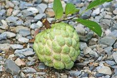 Μήλο ζάχαρης ή squamosa Annona στοκ φωτογραφίες με δικαίωμα ελεύθερης χρήσης