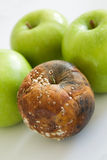 μήλο κακό Στοκ φωτογραφία με δικαίωμα ελεύθερης χρήσης