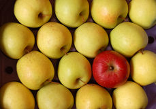 μήλο μη συμμορφούμενο Στοκ φωτογραφία με δικαίωμα ελεύθερης χρήσης