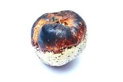 Μήλο που απομονώνεται σάπιο στο λευκό Στοκ Εικόνα