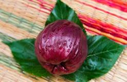 Μήλο που συγκομίζεται της Μαλαισίας από το αγρόκτημα γεωργίας στοκ εικόνες με δικαίωμα ελεύθερης χρήσης