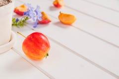μήλο στον άσπρο ξύλινο πίνακα Στοκ Φωτογραφίες