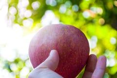 μήλο ώριμο Στοκ φωτογραφία με δικαίωμα ελεύθερης χρήσης