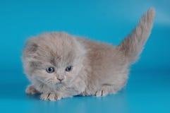 μήνας γατακιών ένας στοκ φωτογραφία