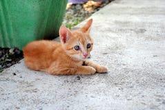 μήνας γατακιών παλαιός πορτοκαλής Στοκ Φωτογραφία