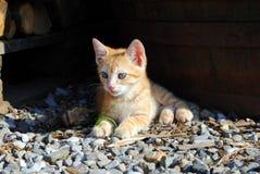 μήνας γατακιών παλαιός πορτοκαλής Στοκ Εικόνες