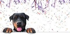 Μήνυμα καρναβαλιού rottweiler Στοκ εικόνες με δικαίωμα ελεύθερης χρήσης