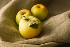 Μήλα δέντρων στο ύφασμα λινού Στοκ Εικόνα