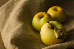Μήλα δέντρων στο ύφασμα λινού Στοκ Φωτογραφίες