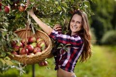 Μήλα επιλογής γυναικών Στοκ εικόνες με δικαίωμα ελεύθερης χρήσης