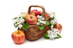 Μήλα και λουλούδια Apple-δέντρων σε ένα καλάθι σε ένα άσπρο υπόβαθρο Στοκ Φωτογραφία