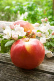 Μήλα με τα λουλούδια Στοκ Φωτογραφία