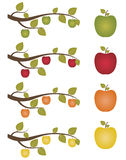 μήλα που τίθενται Στοκ φωτογραφίες με δικαίωμα ελεύθερης χρήσης