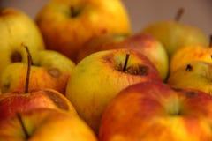 μήλα σάπια Στοκ Εικόνες