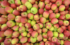 Μήλα σε ένα διαμέρισμα αποθήκευσης Στοκ Εικόνες