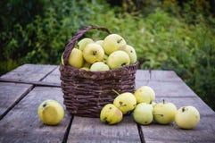Μήλα σε ένα καλάθι Στοκ φωτογραφίες με δικαίωμα ελεύθερης χρήσης