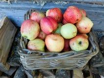 Μήλα σε ένα καλάθι Στοκ Φωτογραφία