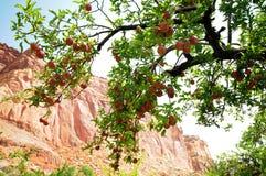Μήλα σκοπέλων Capitol στοκ φωτογραφία με δικαίωμα ελεύθερης χρήσης