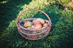 Μήλα στο καλάθι Στοκ φωτογραφία με δικαίωμα ελεύθερης χρήσης