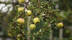 Μήλα στο χιόνι φιλμ μικρού μήκους