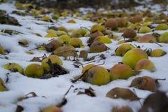 Μήλα στο χιόνι Στοκ εικόνες με δικαίωμα ελεύθερης χρήσης