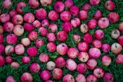 Μήλα του παραδείσου Στοκ εικόνες με δικαίωμα ελεύθερης χρήσης