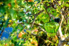 Μήλα φθινοπώρου Στοκ Φωτογραφίες