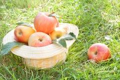 μήλα φρέσκα Στοκ φωτογραφία με δικαίωμα ελεύθερης χρήσης