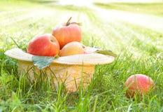 μήλα φρέσκα Στοκ εικόνες με δικαίωμα ελεύθερης χρήσης