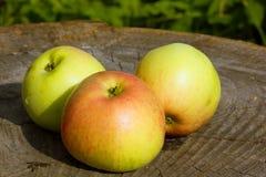 μήλα ώριμα τρία Στοκ εικόνες με δικαίωμα ελεύθερης χρήσης