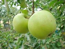 Μήλα Στοκ Εικόνες