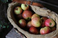 Μήλα Arganic Στοκ Εικόνες
